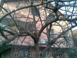 Komple Bina İstanbul Paşabahçe Devlet Hastanesi 100 M.MESAFEDE SATILIK KELEPİL M