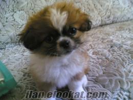 dünyanın en tatlı bebeği