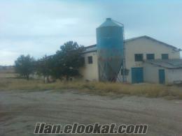 satlık yada kiralık tavuk çiftliği