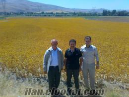 kayseride satlık ilk ekim elenmiş ASPİR BALCI tohumu