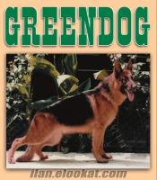 Greendog köpek eğitim merkezi yavru köpek eğitimi ücretsiz köpek tuvalet eğitimi