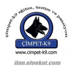 TÜRKİYENİN EN GÜVENİLİR KÖPEK SATIŞ ÇİFLİĞİ Köpek Bir kez alınır!!! Güvenilir