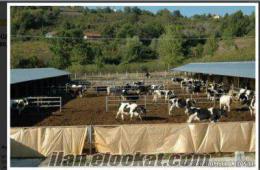 Düzce Kiralık Çiftlik Hazer Emlak Kiralık Süt Çiftlikleri 200 baş