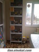5 Takım Muhabbet Yerli Hollanda Mutasyon+ PVC Kafes Yuvalıklar Malzemeler toplamda