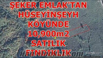 38-ŞEKER EMLAKTAN HÜSEYİNŞEYH KÖYÜNDE 10900m2 SATILIK FINDIKLIK