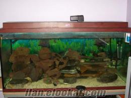 tropheus moori moliro kolonisi ve akvaryum tum tesisat satılık