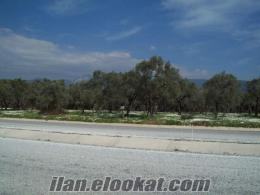 Torbalı Kemalpaşa yolu üzerinde yola sıfır 2800 m2 lik zeytinlik