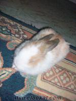 Şişlide satılık tavşan