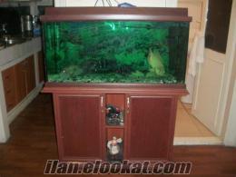 Mobilyalı Akvaryumlarımı ve Balıklarımı Toptan Satıyorum