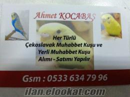 Adana muhabbet kuşu