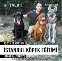 İstanbul Köpek Eğitimi