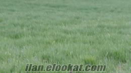 Adana Karaisalı satılık arsa