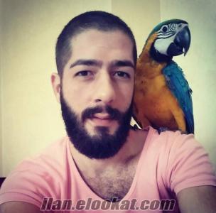 Bakırköyde macaw papağan