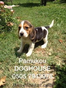 BEAGLE PAMUKÇU DOGHOUSE DA