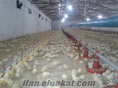 balıkesir erdekde satılık tavuk çiftliği