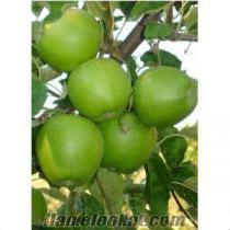 dalindan satilik fuji elma