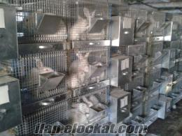 Isparta Savda et tavşanı