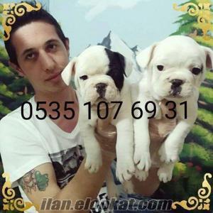 satılık sevimli french bulldog yavruları