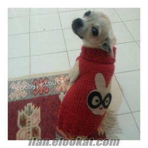 Köpek kıyafetleri satılık