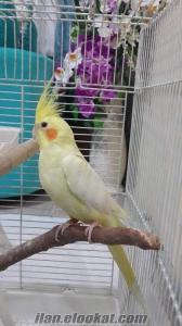 Antalya Konyaaltı sultan papağanı