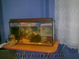 Kartal lepistes balığı