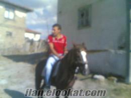 rahvan yarış atı