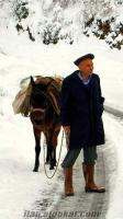 Satılık Merkep Eşşek At Katır Alınır Satılır