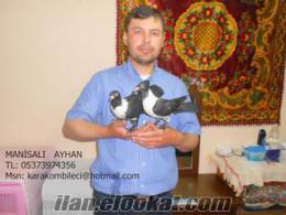 manisadan sahibinden satılık kara kombile güvercin