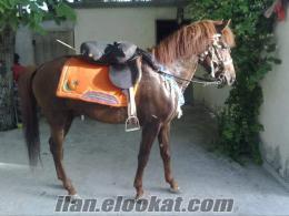 sandıklıdan rahvan at