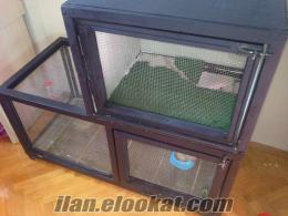 İzmirde Eğitimli Lop Tavşanı ve 3 Odalı Kafesi
