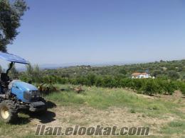 Zeytin ve nar bahçesine traktör kullanabilen Kahya