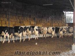 islam et tarım ve hayvancılık