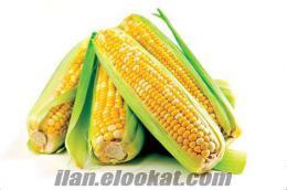 Viranşehir tarım ürünleri.