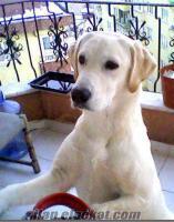 Pamukovada kayıp köpek