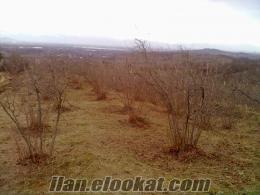 Hendek Kazımiye Köyünde 5700 m 2B FINDIKLIK