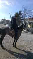 satılık rahvan at