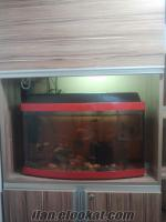 65 cm müthiş 0 gibi bombeli akvaryum ve balıkları