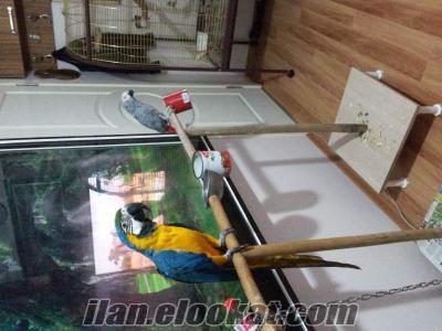 izmirde papagan lar takas olur