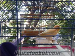 satılık kanarya Antalya