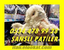 PEKİNES YAVRULARI ŞANSLI PATİLER DE