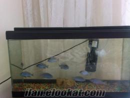 uygun fiyata cins balık ve akvaryum seti