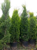 Dış mekan süs bitkileri