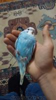 Kadıkoyde muhabbet kuşları