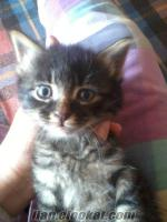 istanbulda ücretsiz kedi