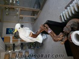 papağan ve muhabbet