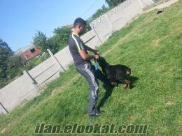 Bursa Osmangazi köpek eğitimi
