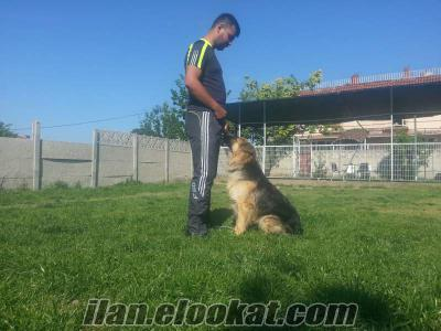 köpek eğitimi ve pansıyonu