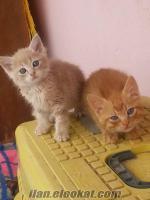 Ankara sevimli yavrular