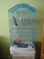 istanbulda satılık yavru alınmış çift sultan papağanı kafesiyle birlikte+yuvalık