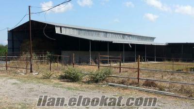 Çanakkale Biga Bahçeli Köyü Hayvan Çiftliği ( Biga